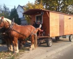 Konji-Pancevo-2-620x350