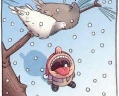 Ptice-snijeg