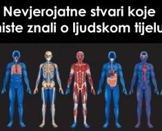 ljudsko-tijelo23454