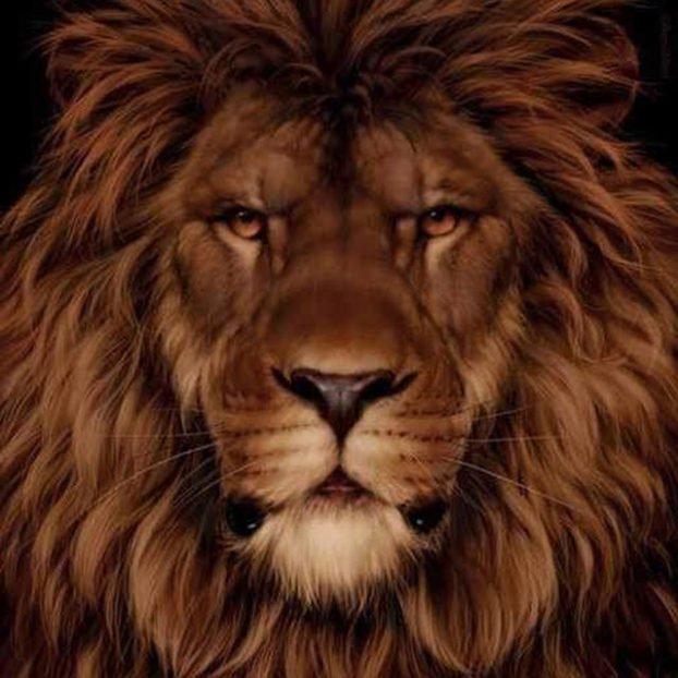 lav-vjeverica-1-622x622