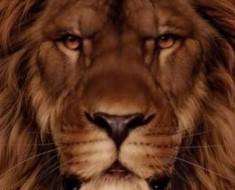 lav-vjeverica454