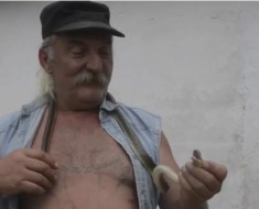 zmije-bosanac