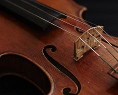 violina_
