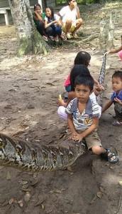 zmija-piton